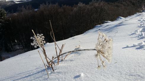 Winterreizen